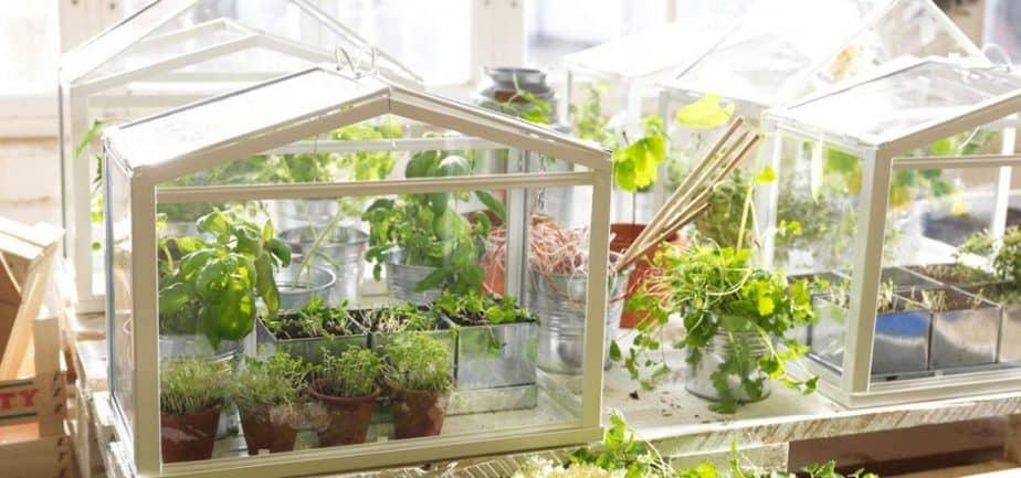 herb garden greenhouse winter