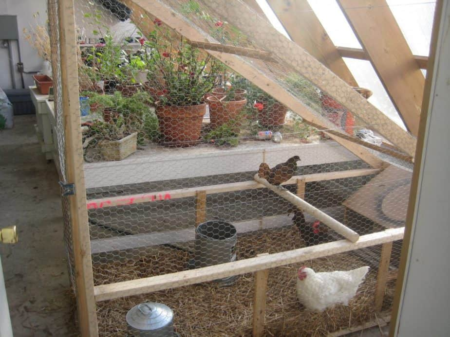 Quick Tips For Chickens In Greenhouses