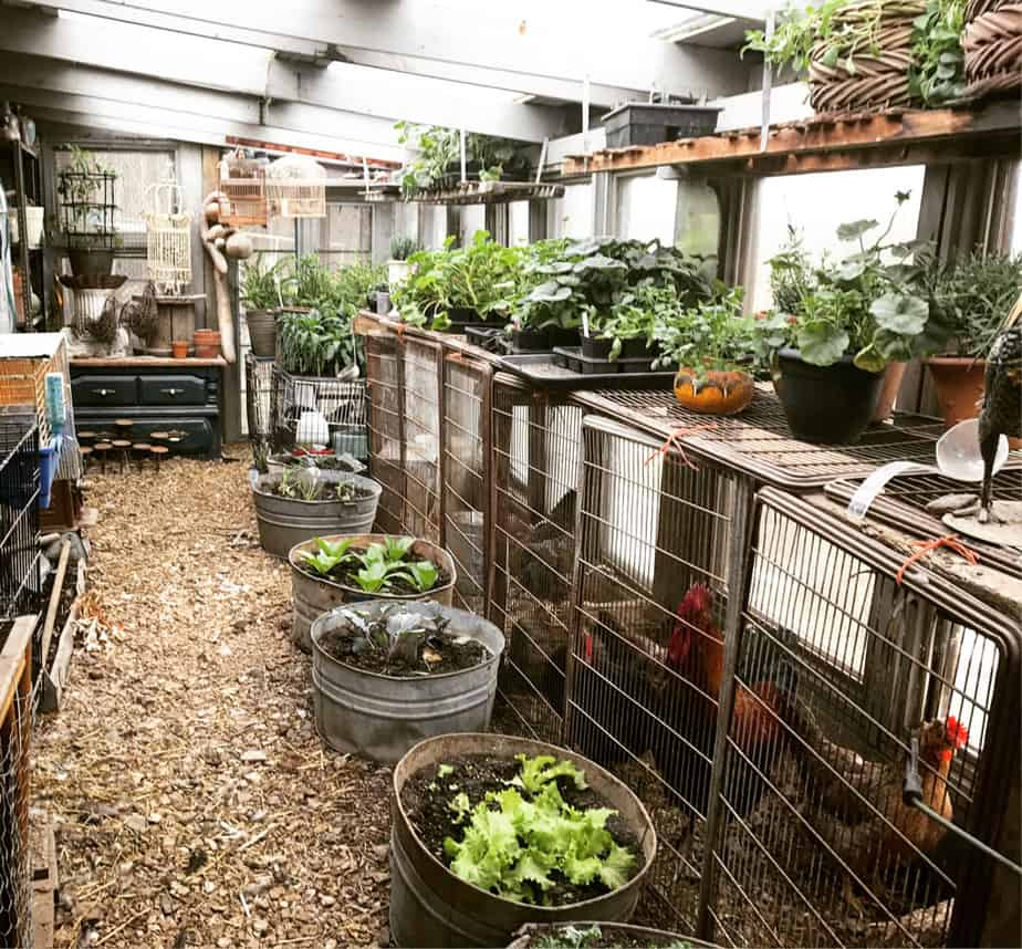 The Benefits Of Keeping Chickens In Your Greenhouse
