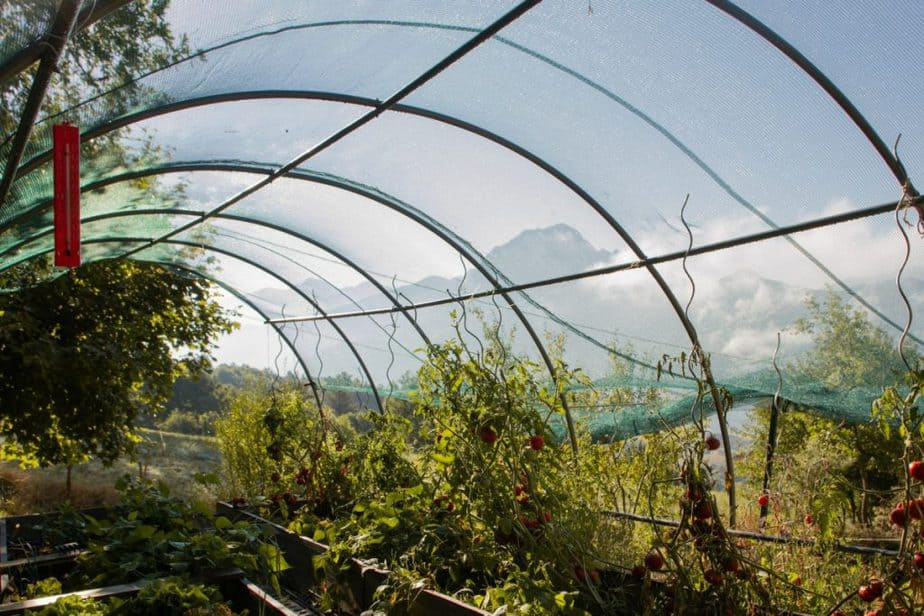 Books About Greenhouse Gardening