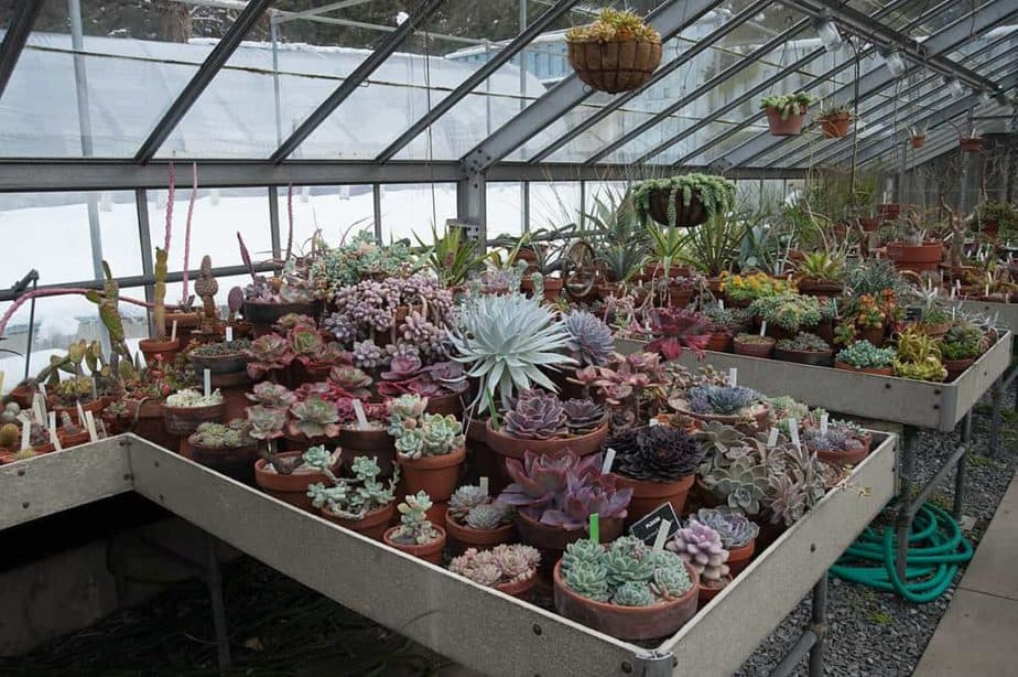 Why Grow Succulents in a Greenhouse?