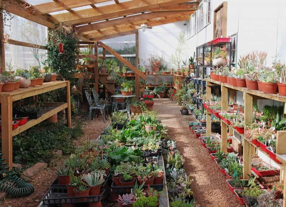 succulent greenhouse tips