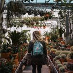 How to Grow Succulents in a Greenhouse