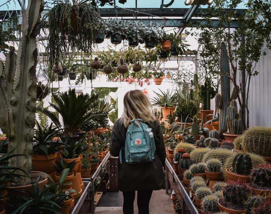 Read more about the article How to Grow Succulents in a Greenhouse